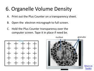 6. Organelle Volume Density