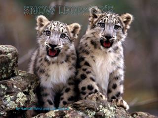 SNOW LEOPARD'S