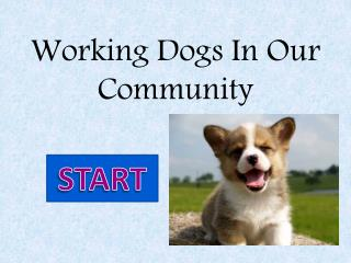 Working Dogs In Our Community