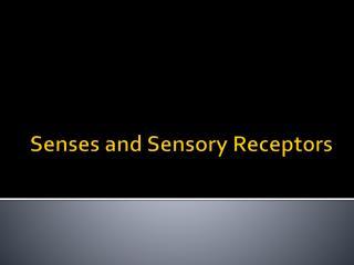 Senses and Sensory Receptors