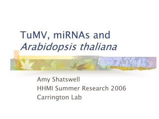TuMV, miRNAs and Arabidopsis thaliana