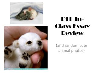 RTL In-Class Essay Review