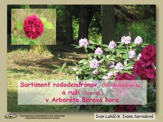 Sortiment  rododendrónov ( Rhododendron  sp .) a ruží  ( Rosa sp .) v Arboréte Borová hora