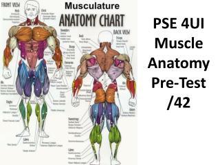 PSE 4UI Muscle Anatomy Pre-Test /42