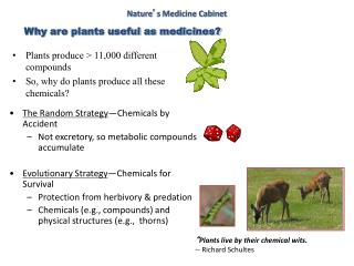 Plants produce > 11,000 different compounds So, why do plants produce all these chemicals?
