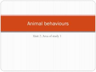 Animal behaviours