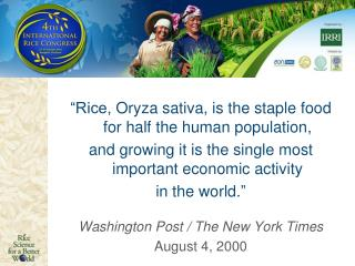"""Rice,  Oryza  sativa, is the staple food for half the human population,"
