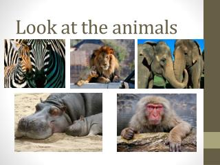 Look at the animals