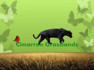 Cimarron Grasslands