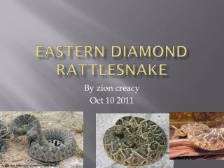 Eastern diamond rattlesnake