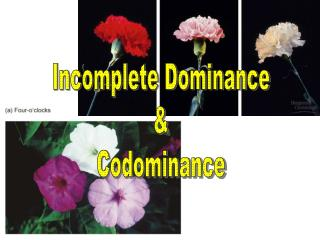 Incomplete Dominance & Codominance