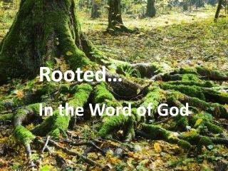 Rooted…