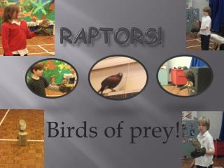 Raptors!