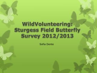 WildVolunteering :  Sturgess  Field Butterfly Survey 2012/2013