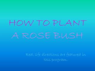 HOW TO PLANT  A ROSE BUSH
