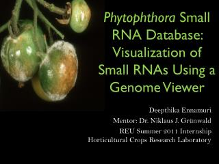 Phytophthora Small  RNA Database: Visualization of Small RNAs Using a Genome Viewer