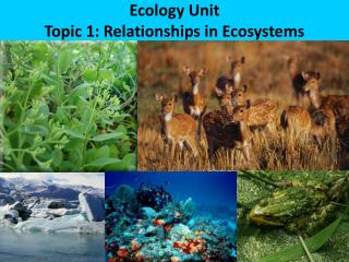 Ecology Unit Topic 1: Relationships in Ecosystems