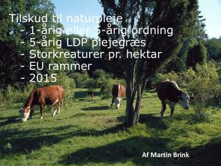 Af Martin Brink