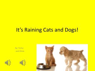 It�s Raining Cats and Dogs!