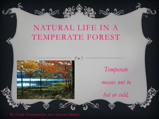 Natural Life in a Temperate Forest