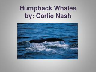 Humpback Whales  by:  Carlie  Nash