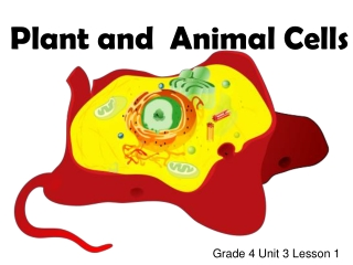 Are plant and animal cells the same or different