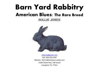 Barn Yard Rabbitry American Blues:  The Rare  B reed Sollie Jones