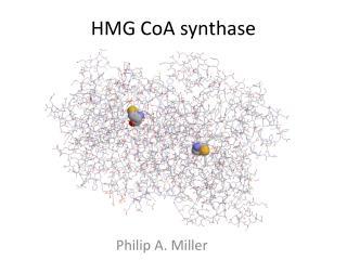 HMG  CoA  synthase