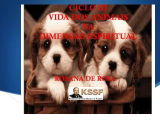 CICLO III VIDA DOS ANIMAIS  NA  DIMENS�O ESPIRITUAL