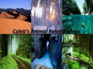 Caleb's Animal Relationships