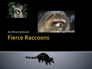 Fierce Raccoons