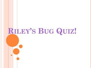 Riley's Bug Quiz!