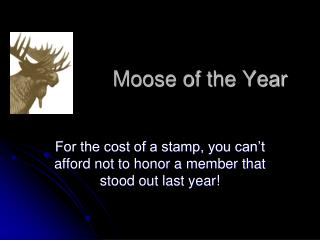 Moose of the Year