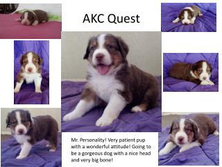 AKC Quest