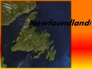 Newfoundland!