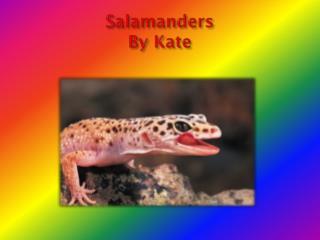 Salamanders By Kate