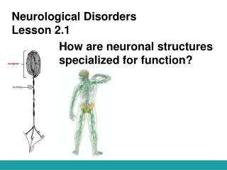 Neurological Disorders Lesson 2.1