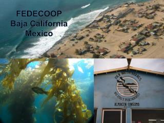 FEDECOOP  Baja California Mexico
