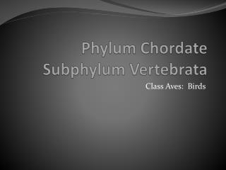 Phylum Chordate Subphylum Vertebrata