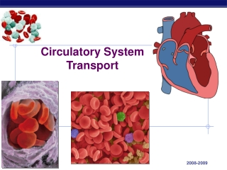 Liver, spleen; Circulatory, respiratory and excretory systems