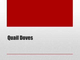Quail Doves