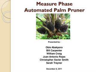 Measure Phase  Automated Palm Pruner
