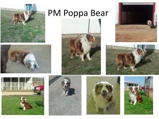 PM Poppa Bear