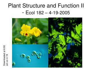 Plant Structure and Function II - Ecol 182   4-19-2005
