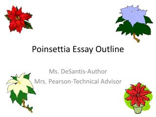 Poinsettia Essay Outline