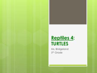 Reptiles 4 :  TURTLES