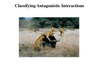 Classifying Antagonistic Interactions