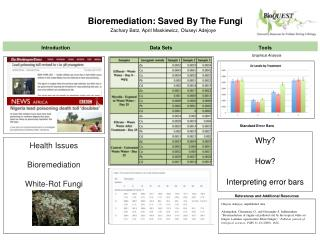 Bioremediation: Saved By The Fungi