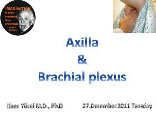 Axilla & Brachial plexus