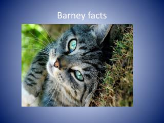 Barney facts